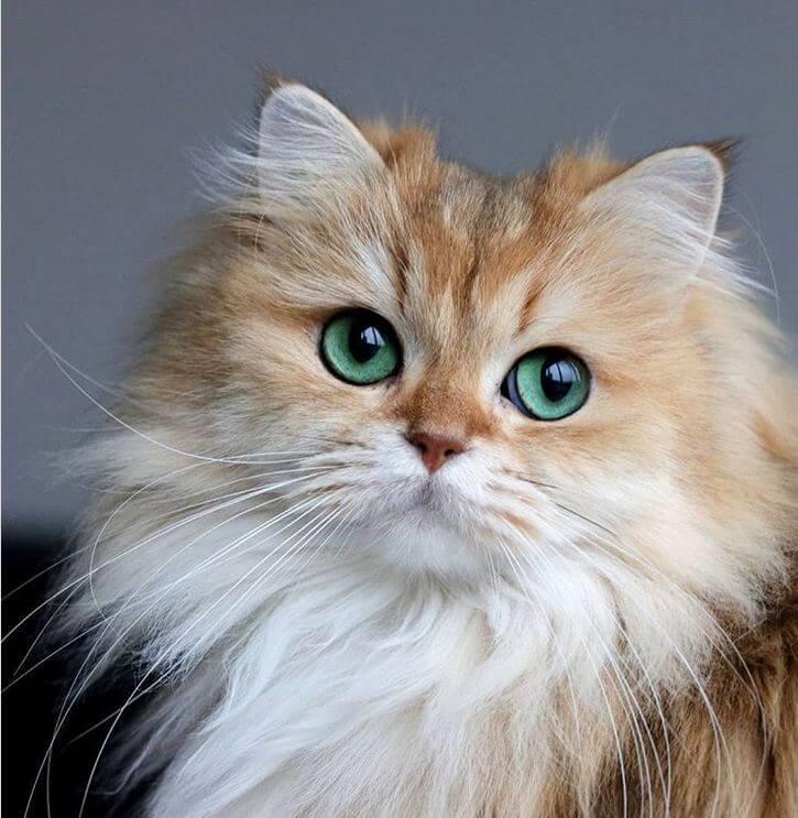 il-gatto-angelo