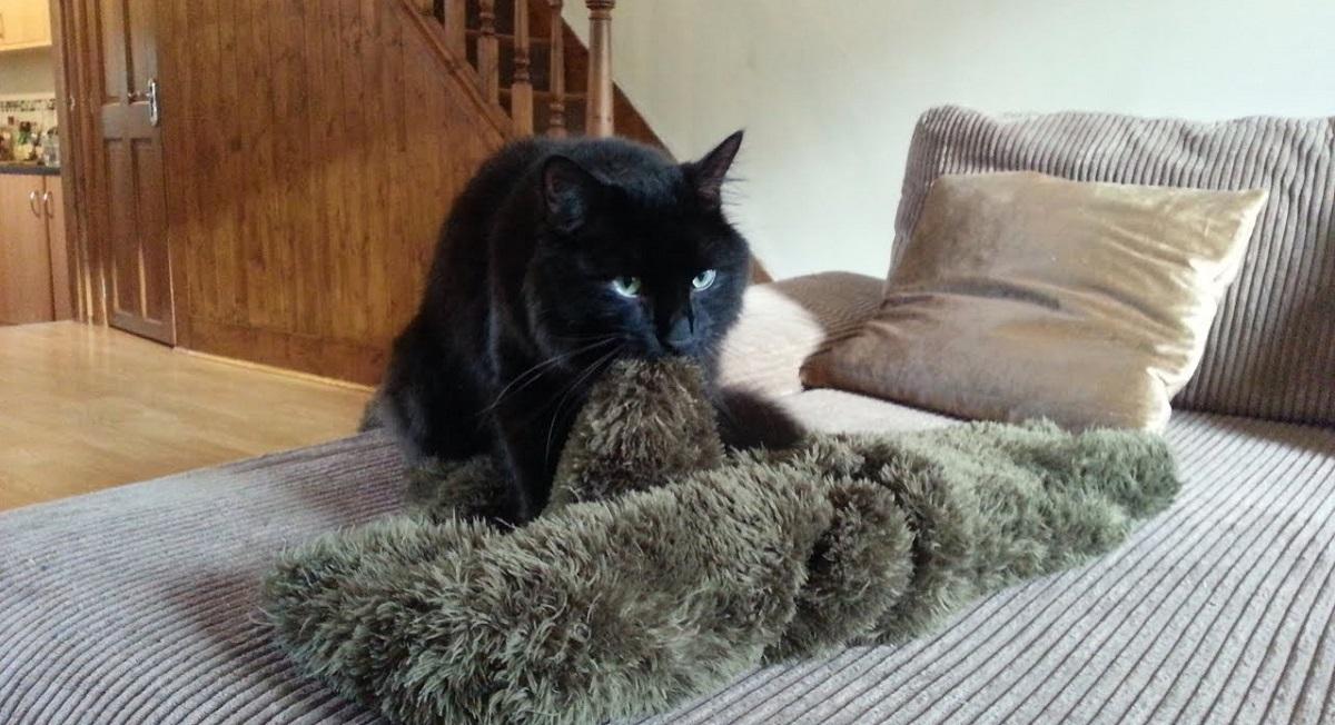 gatto impasta coperta