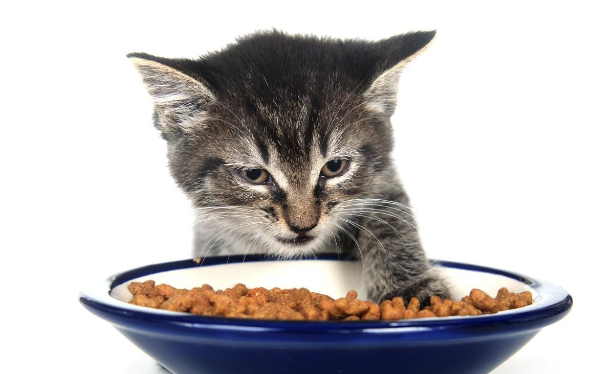 gattino davanti a ciotola