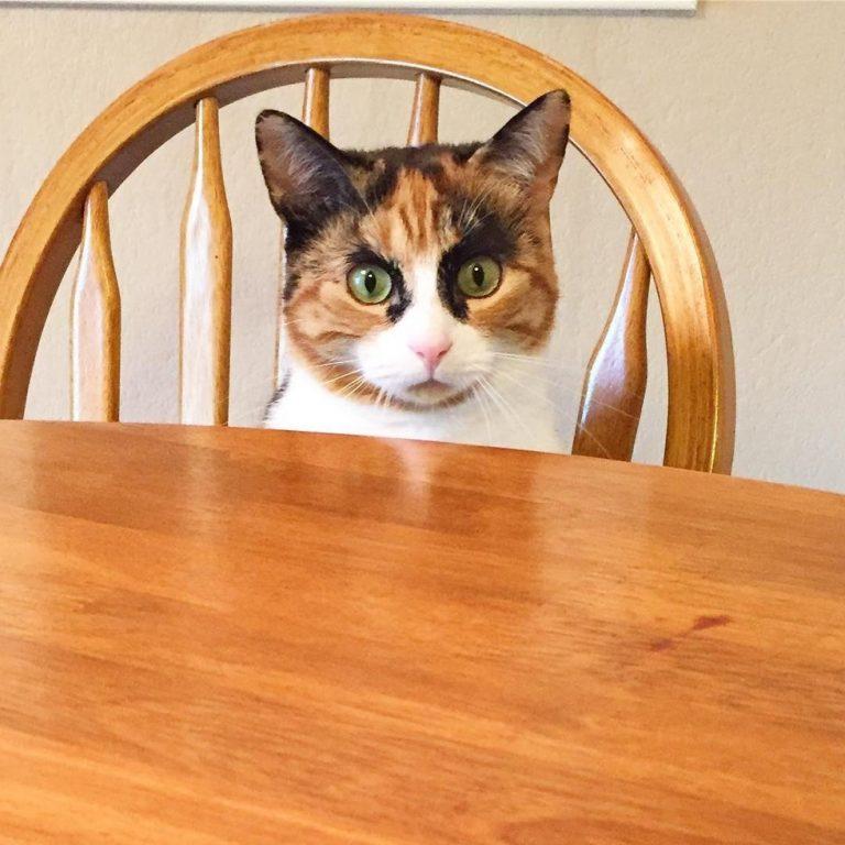 gatto-seduto-sulla-sedia