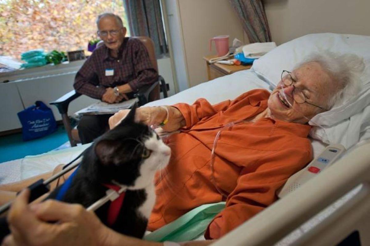 scooter-gatto-con-pazienti