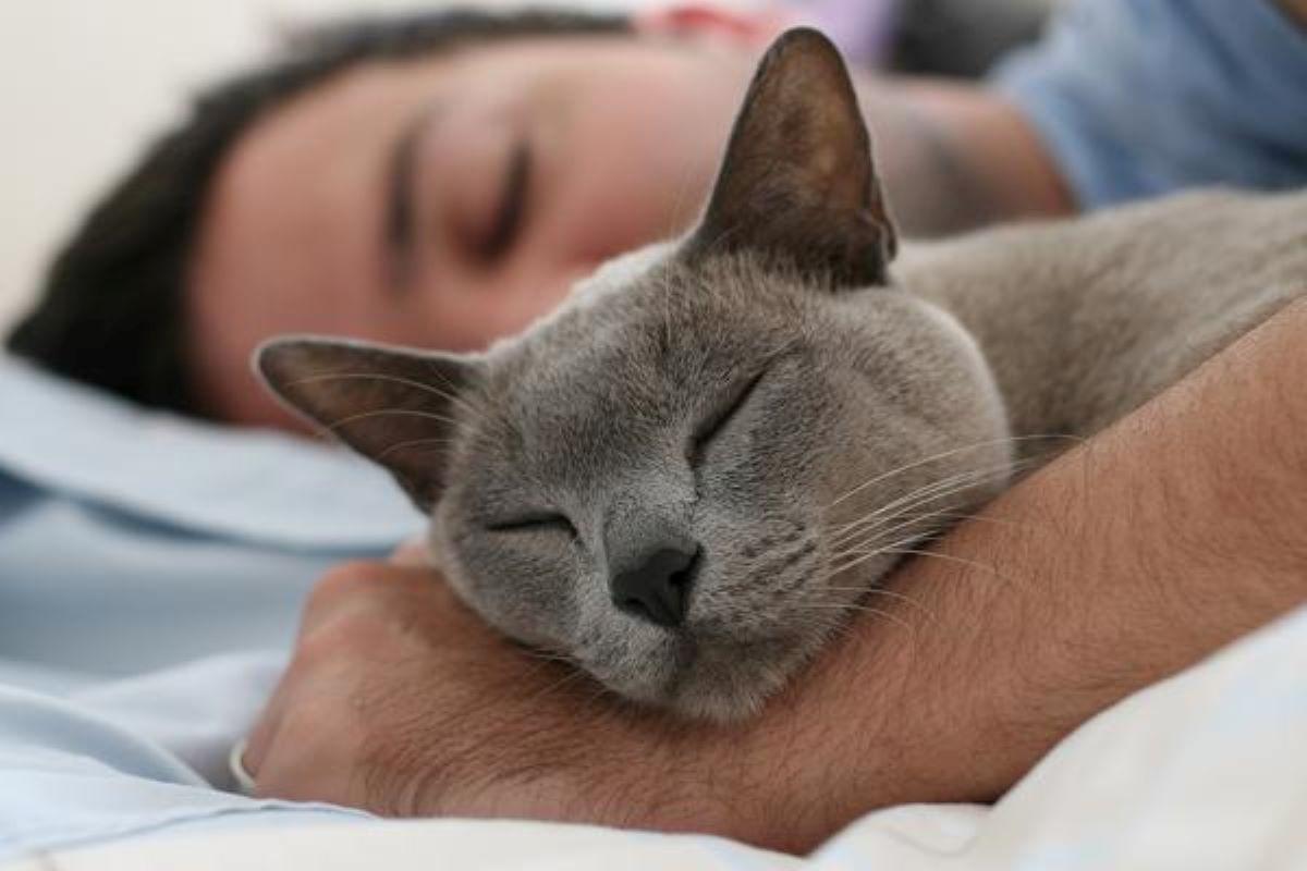 gatto-grigio-che-dorme