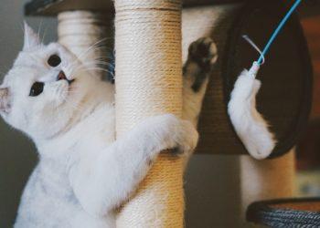 gatto sul tiragraffi