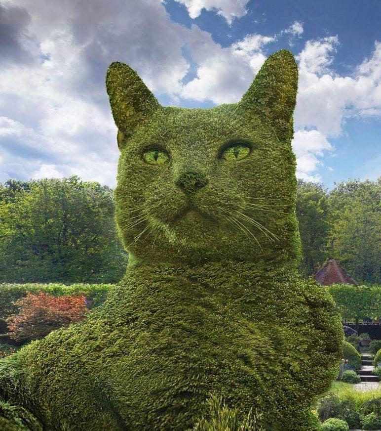profilo-del-gatto-tolly