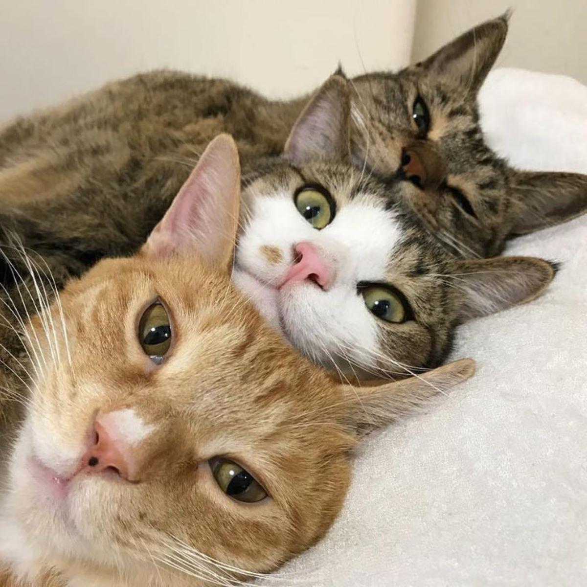 tre-gatti-in-posa