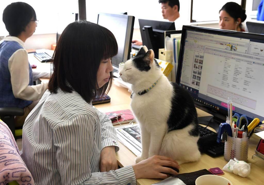 azienda permette gatto antistress