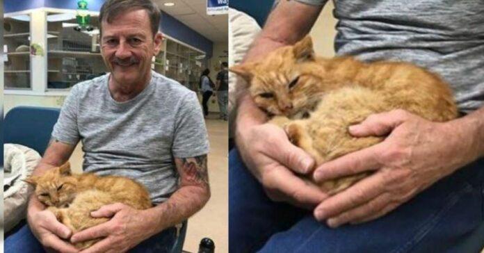 un-gatto-ritrova-il-suo-amico-umano-dopo-14-anni