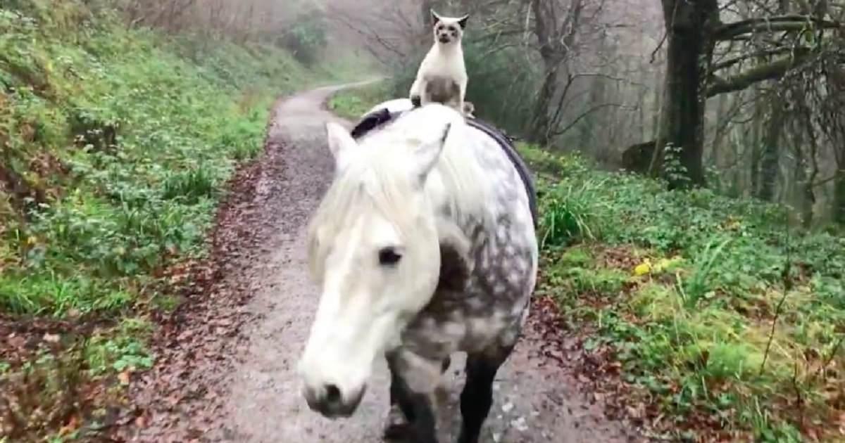 gatto-in-groppa-al-cavallo