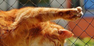gatto con unghie
