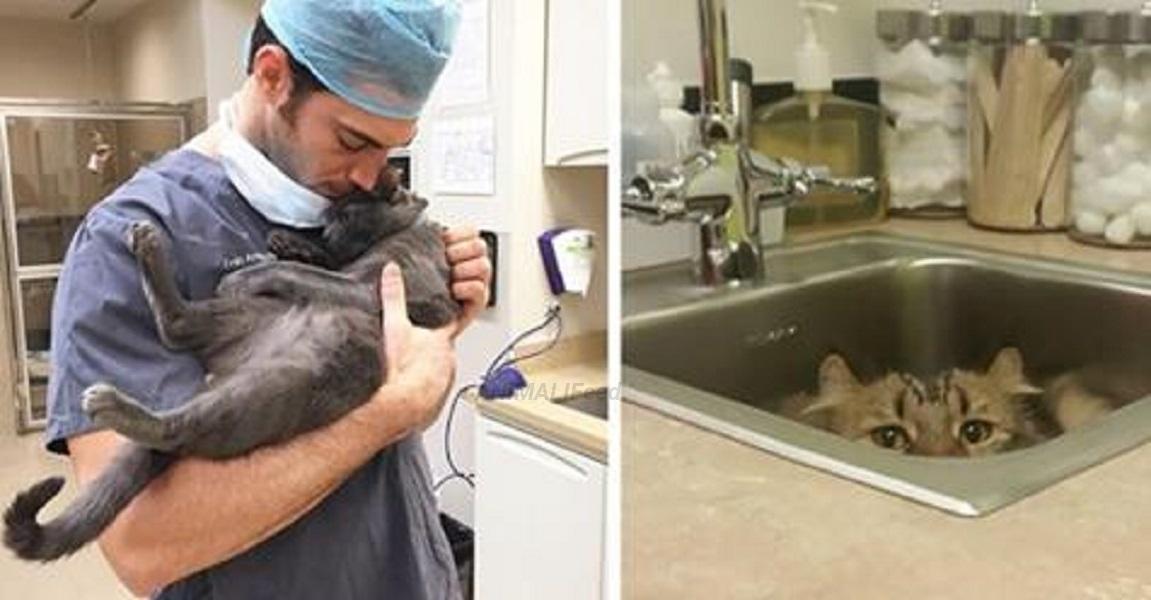 clinica veterinaria cerca personale