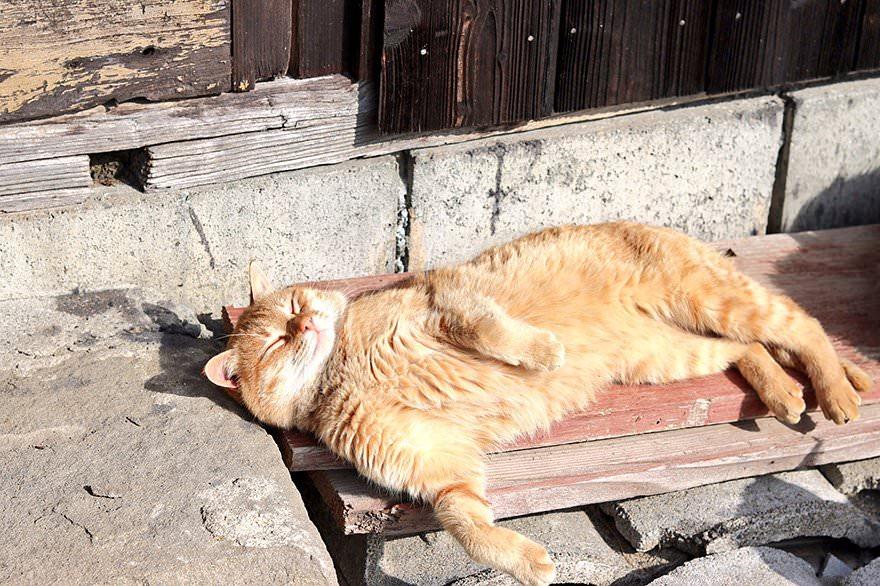 gatto-al-sole