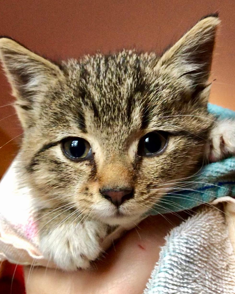 gattino-salvato