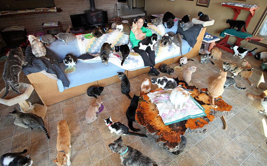 tanti gatti sul divano