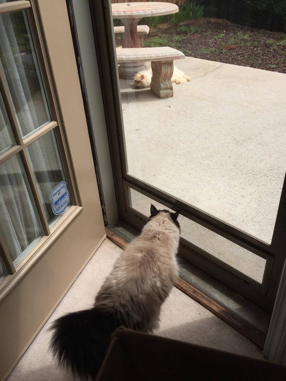 gatta aspetta arrivo del gatto