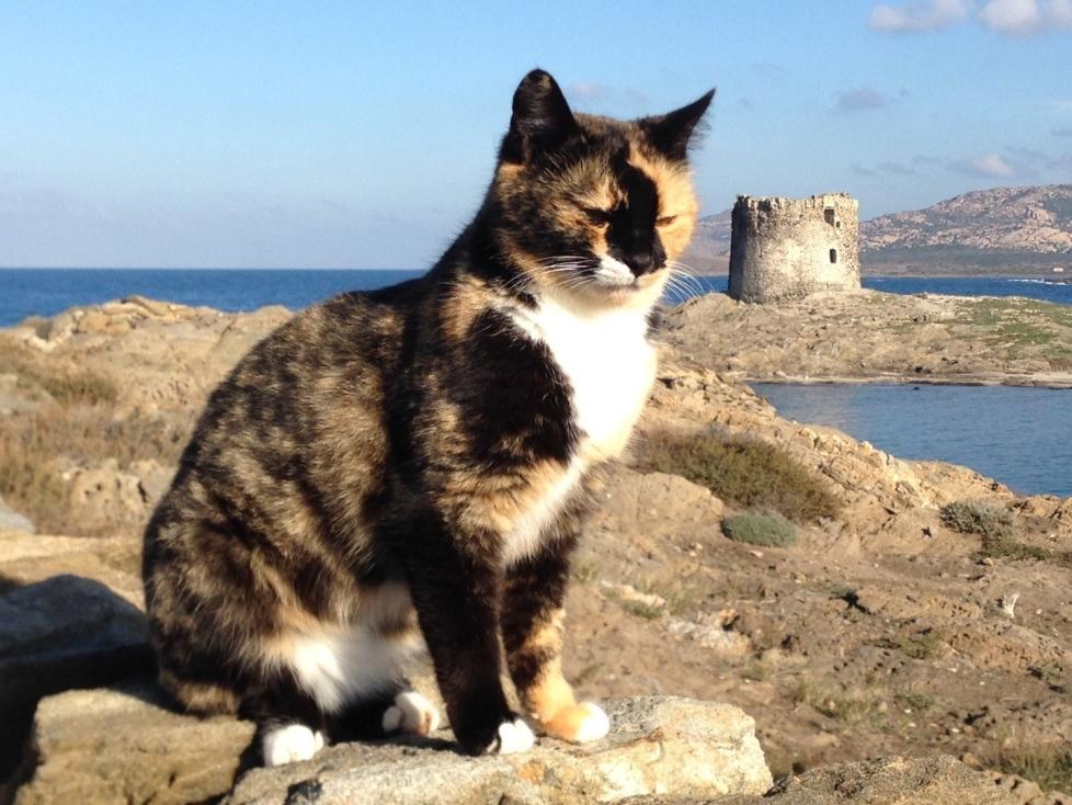 gatto-spiaggia-sardegna