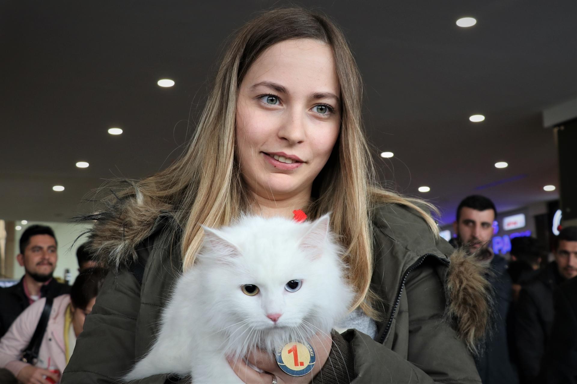 gatto vincitore del titolo