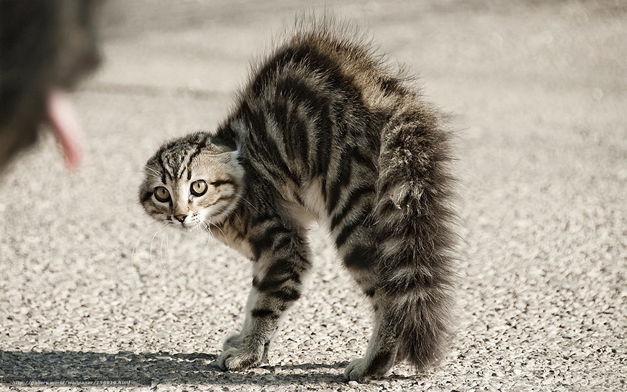 paure-dei gatti