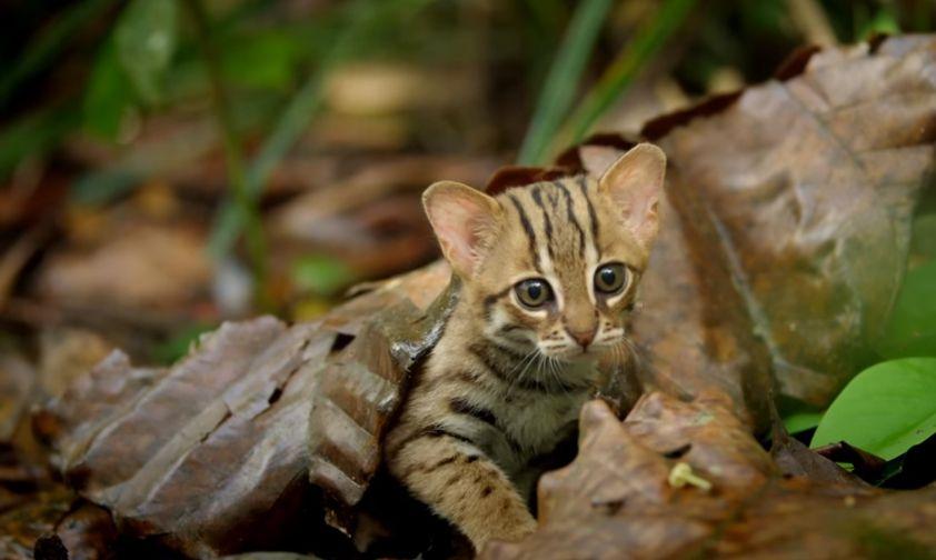 gattino-sotto-lle-foglie