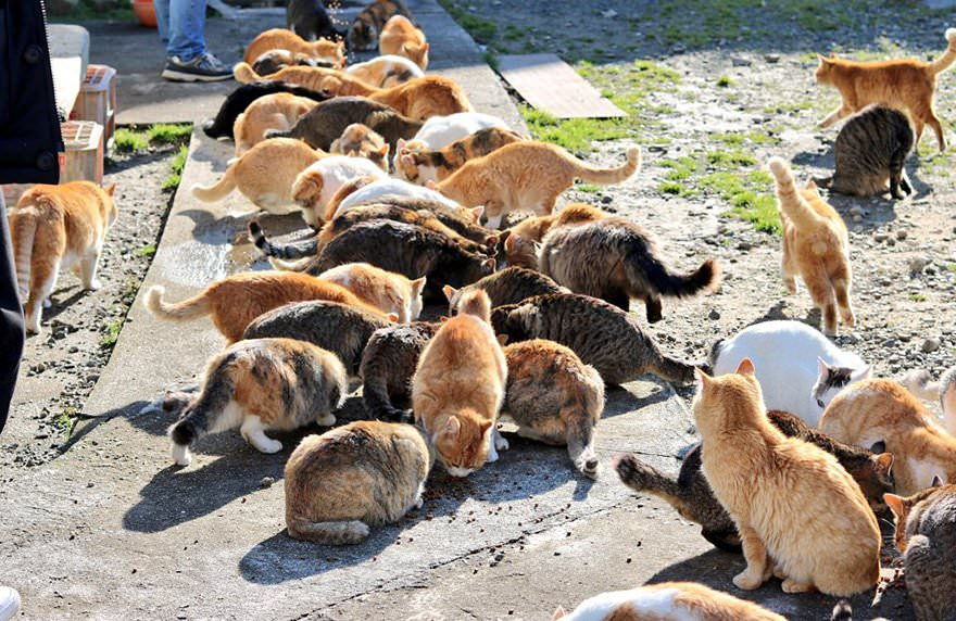 colonia-di-gatti