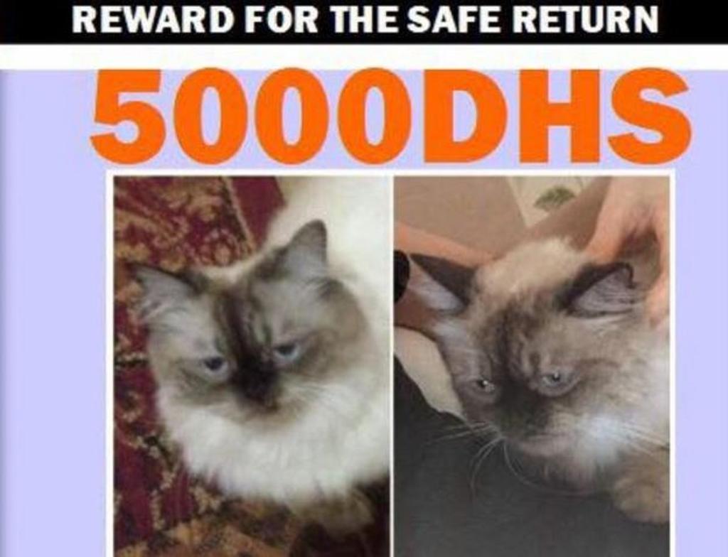 volantini gatto scomparso