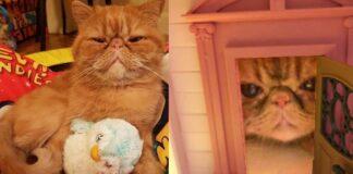 gatto simpatico