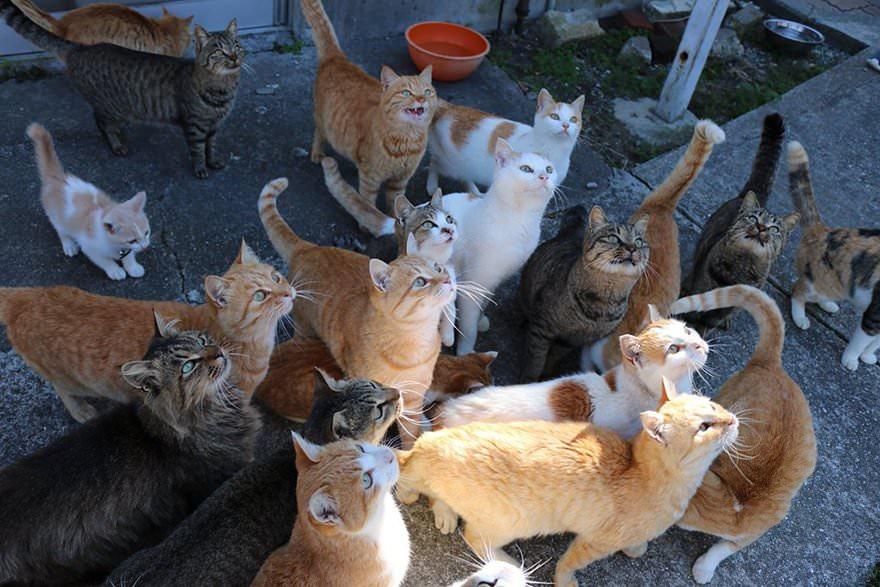 gatti-aspetano-cibo