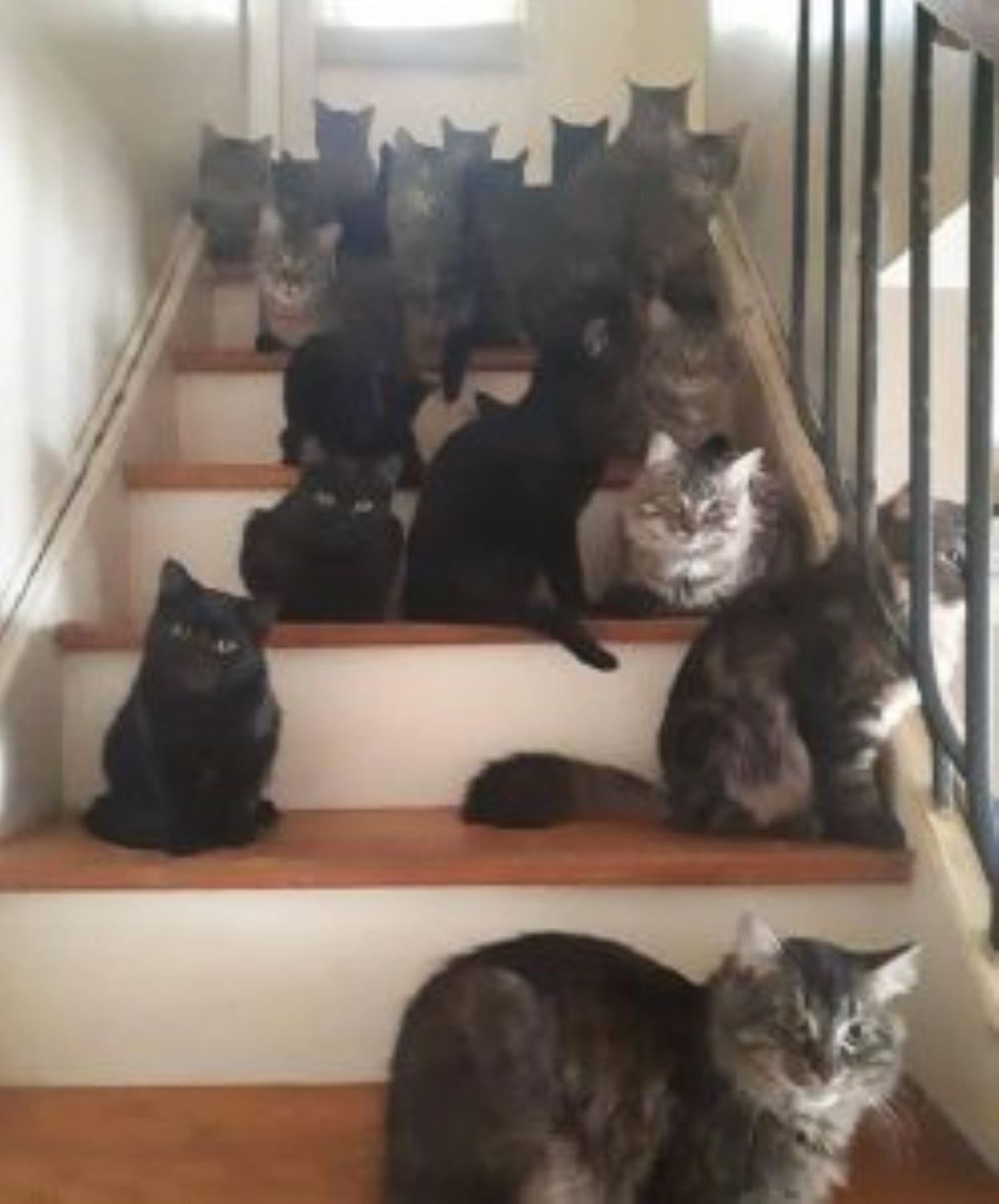 molteplici-gatti-sulle-scale