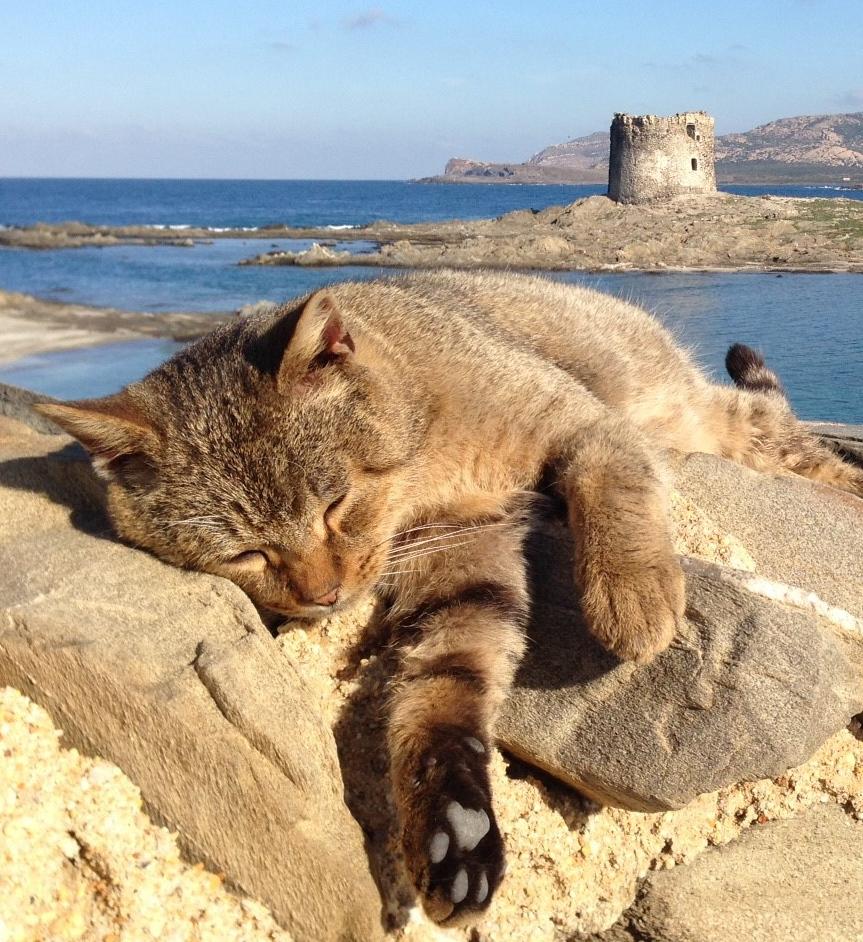 gatto-spiaggia-stintino