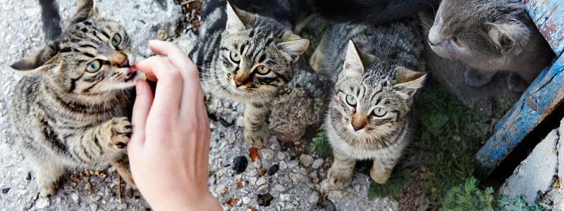 gatti aspettano cibo
