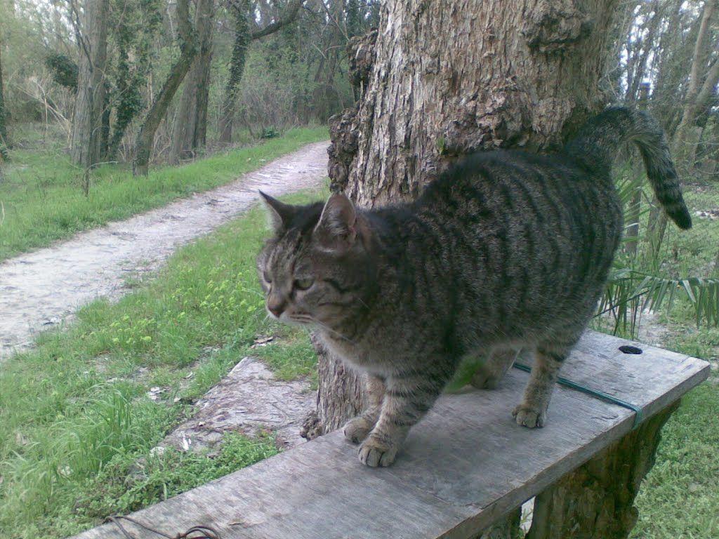 gatto vicino ad un albero