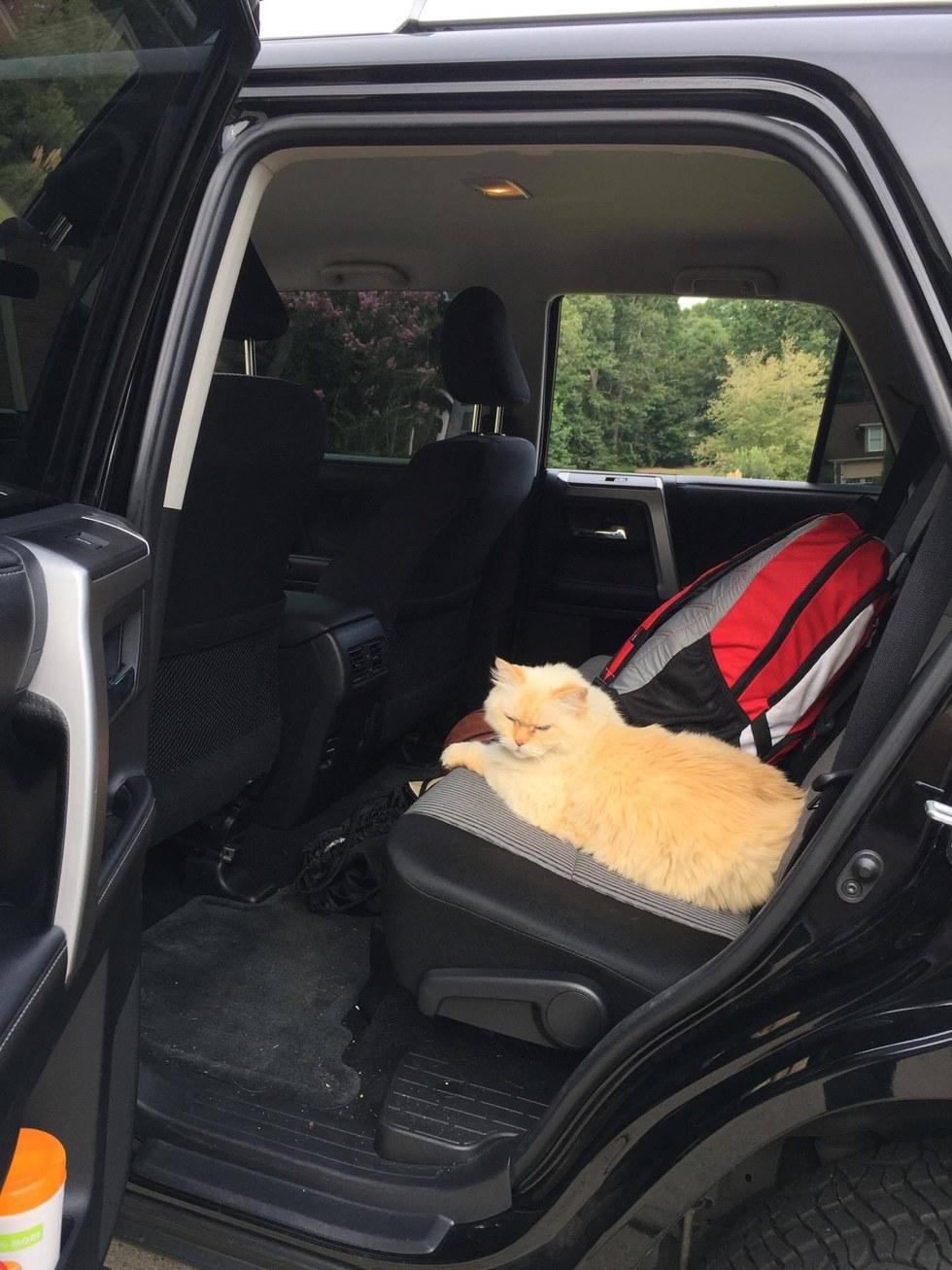 gatto riposa in macchina