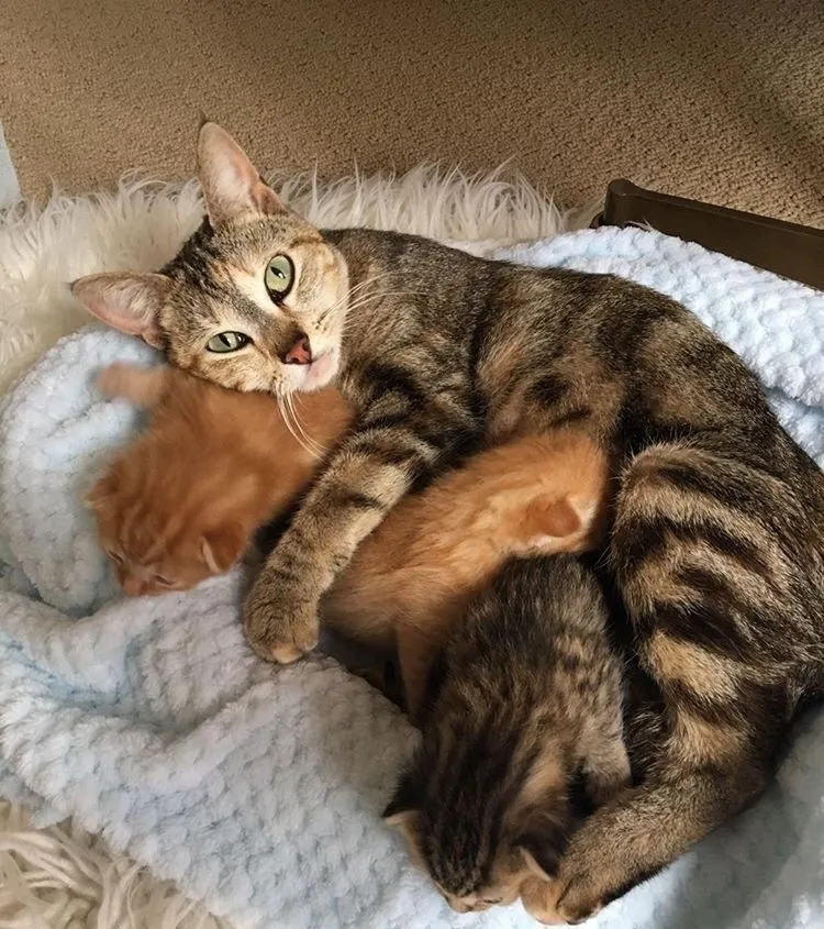 mamma-gatta-ritrova-cuccioli