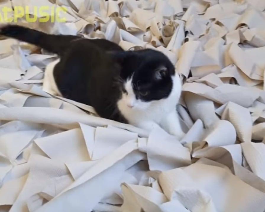 gatto-in-mezzo-alla-carta-igienica