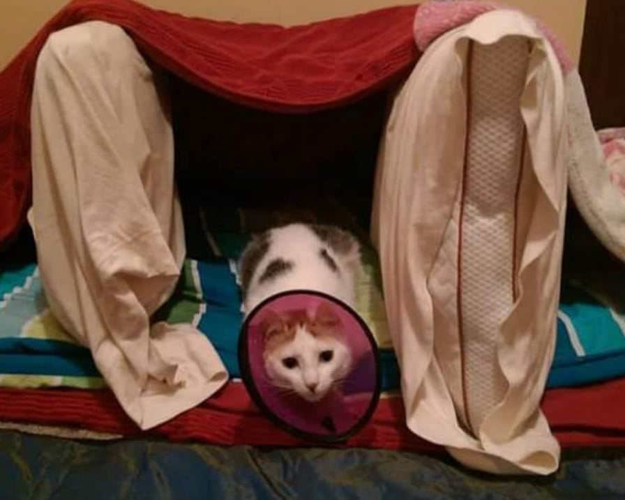 gatto-bisogno-cure