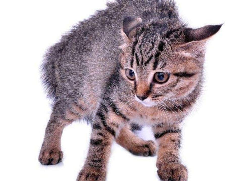 gatto- si spaventa