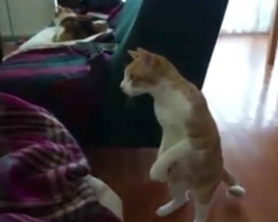 gatto-incuriosito-dal-neonato
