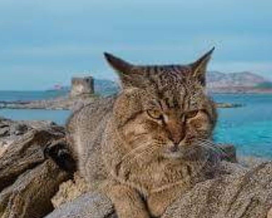 gatto-sulle-rocce