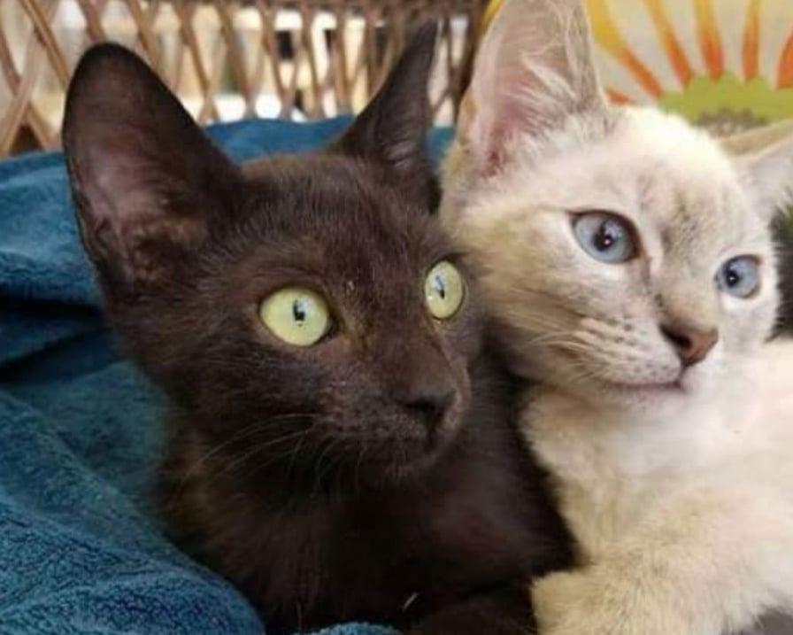 gatti-incollati