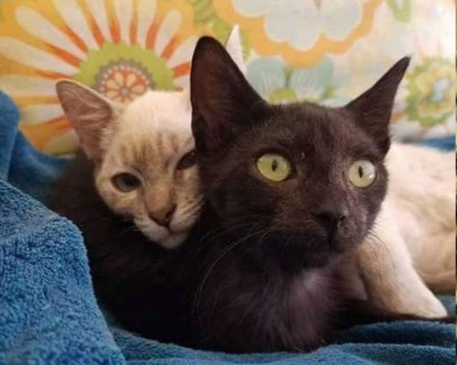 gatti-vivono-in-simbiosi