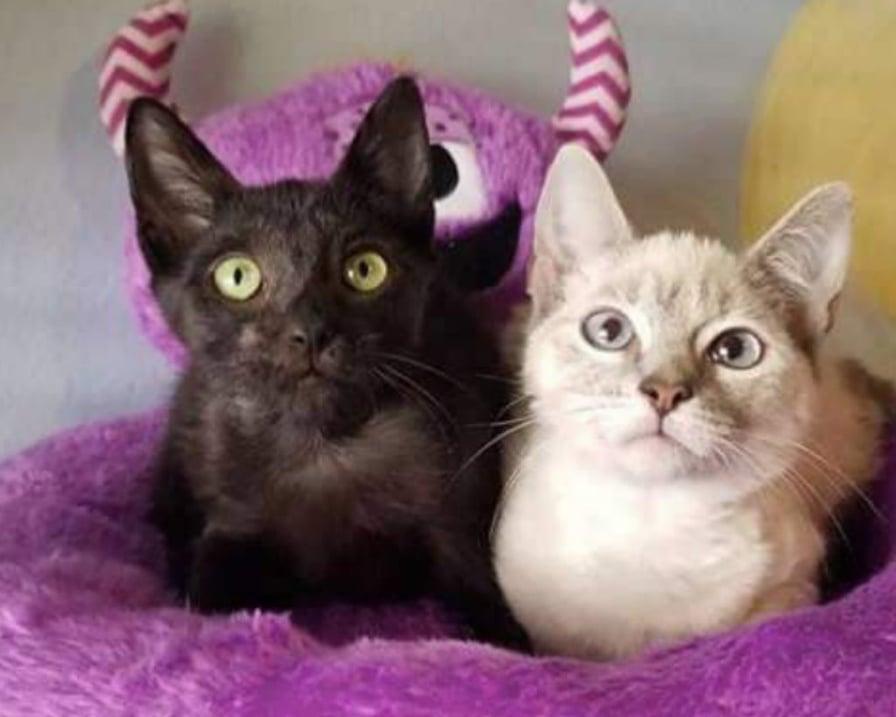 gatto-bianco-e-nero
