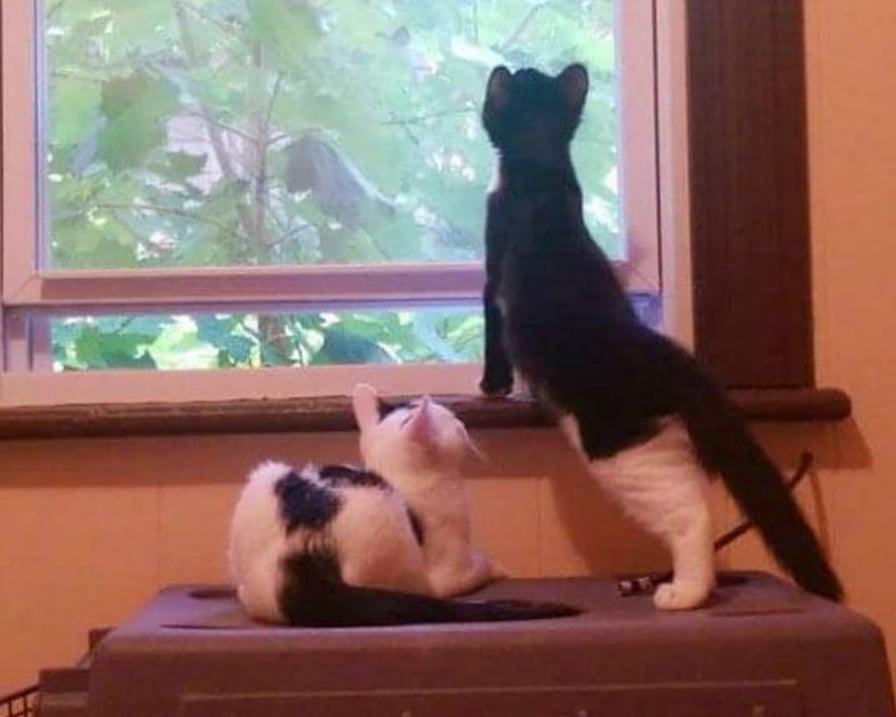gatti-guardano-dalla-finestra