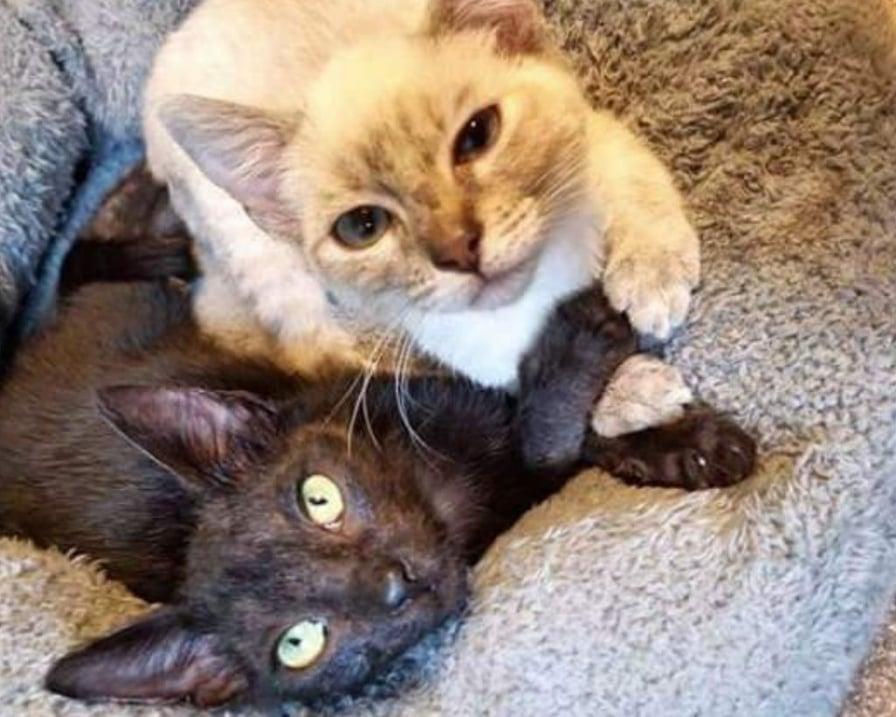 gatti-inseparabili