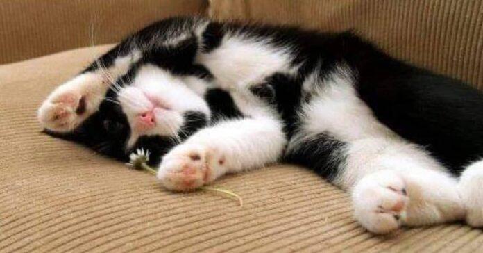 gatto-re-del-nostro-cuore