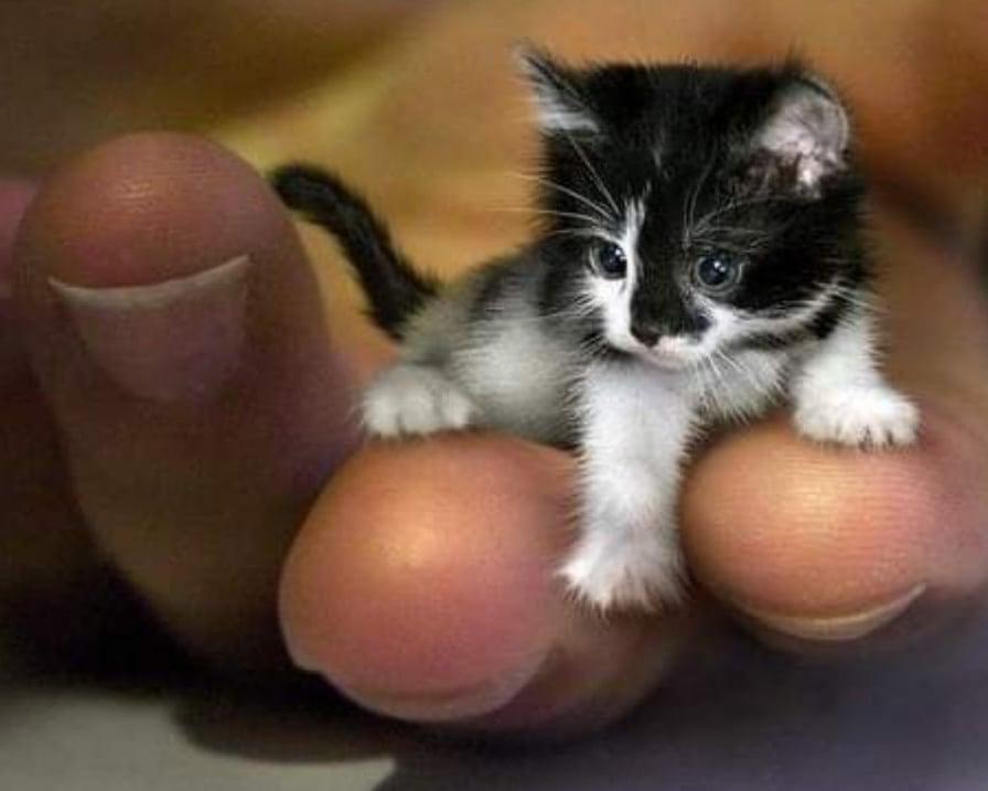 gattino-sul-palmo-della-mano