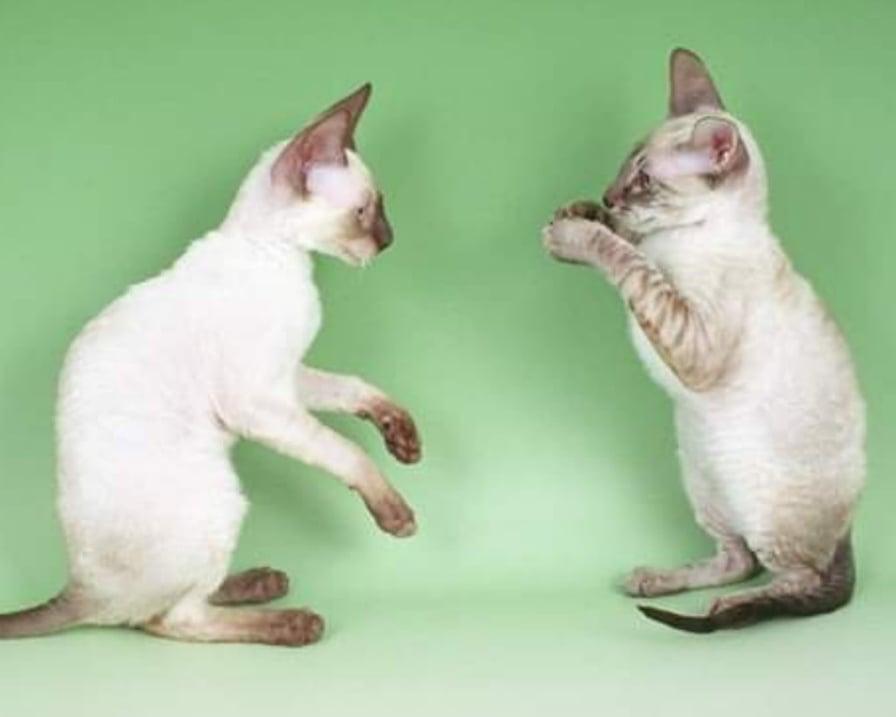 gattini-tra-i-più-piccoli