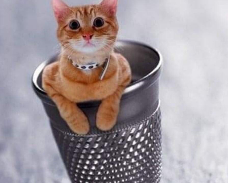 gattino-nel-ditale