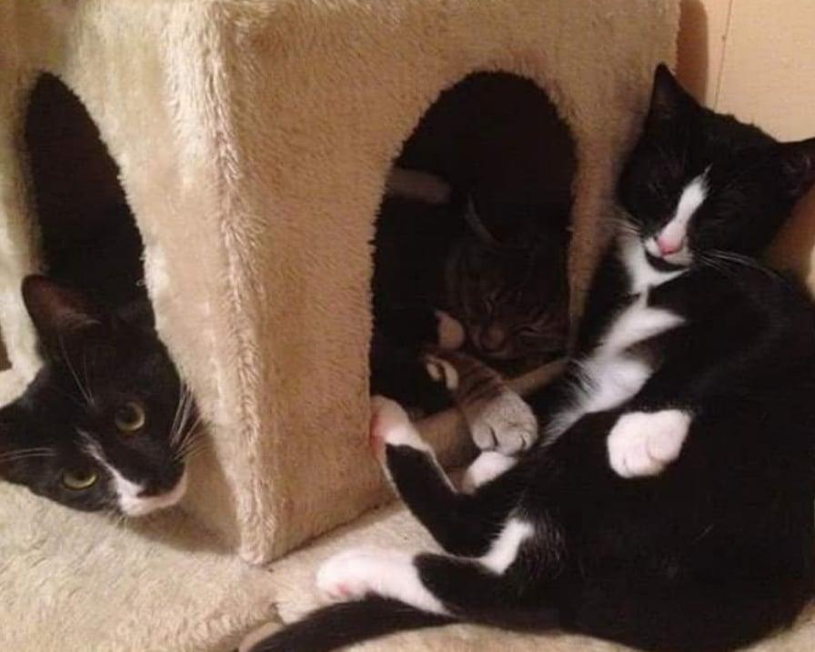 gatti-sul-tiragraffi