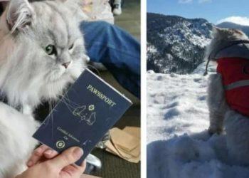 il-gatto-fortunato-viaggiatore
