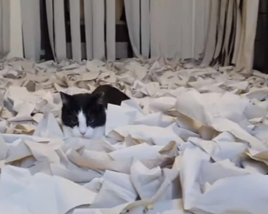 stanza-per-gatti-con-carta-igienica