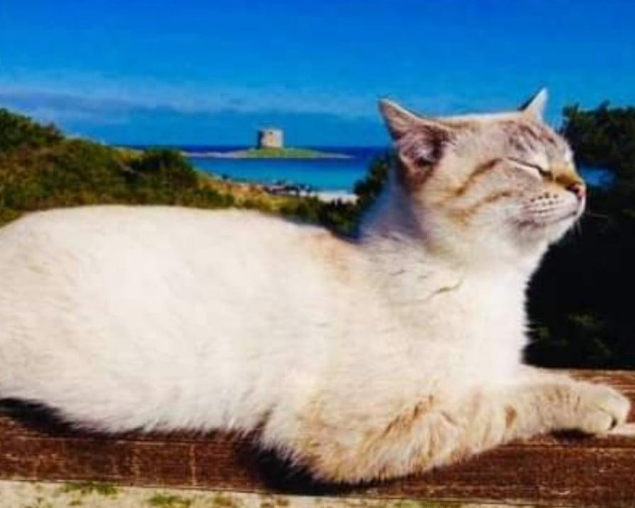 gatto-prende-sole